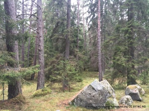 trees in jarvafaltet