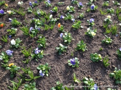 pring flowers